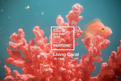 Living Coral: el Pantone de 2019